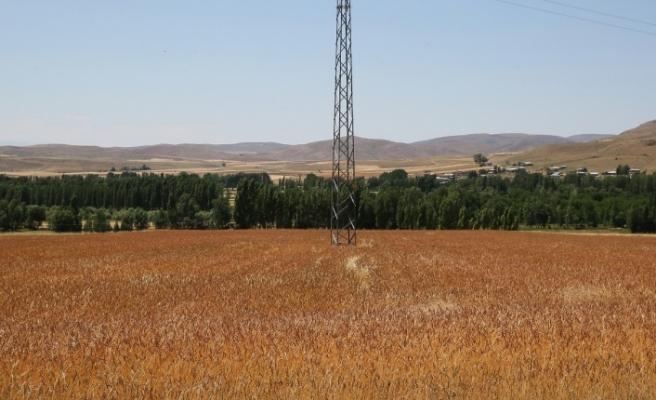 Bayburt Üniversitesi Tarımsal Faaliyetlerine Tüm Olanaklarıyla Devam Ediyor