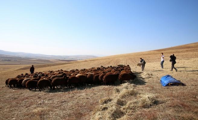 """Vali Cüneyt Epcim: """"Küçükbaş Hayvan Sayısını 350 Binlere Taşımayı Hedefliyoruz"""""""