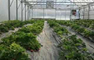 Organik Tarım Çalışmalarına Devam Edilen Bayburt...
