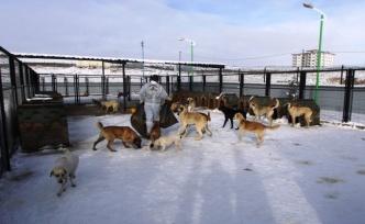 Bayburt Belediyesi Veteriner İşleri Müdürlüğü, ''Sokak hayvanlarının toplanarak barınaklara hapsedilmesi mümkün değildir''